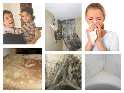 pelėsio poveikis sveikatai ir Jūsų turtui - 860651043