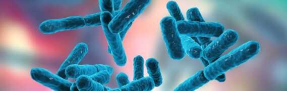 Patalpų paviršių dezinfekavimas gyvosiomis bakterijomis probijotikais Naujiena Lietuvoje! - PelesioNaikinimasSalinimas.lt